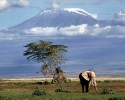 Kilimandżaro_6