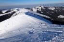 Rakoń zimą-6