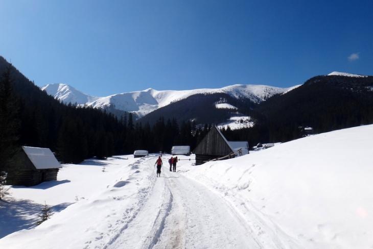 Rakoń zimą-1