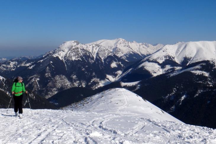 Rakoń zimą-3