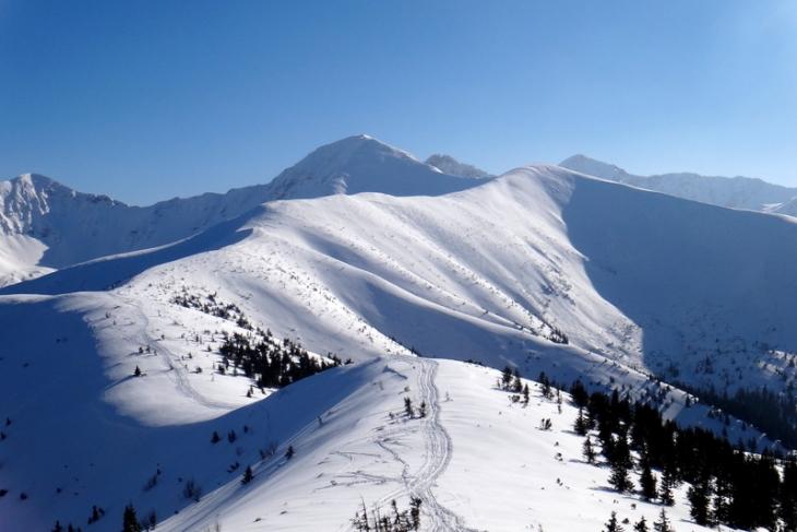Rakoń zimą-4