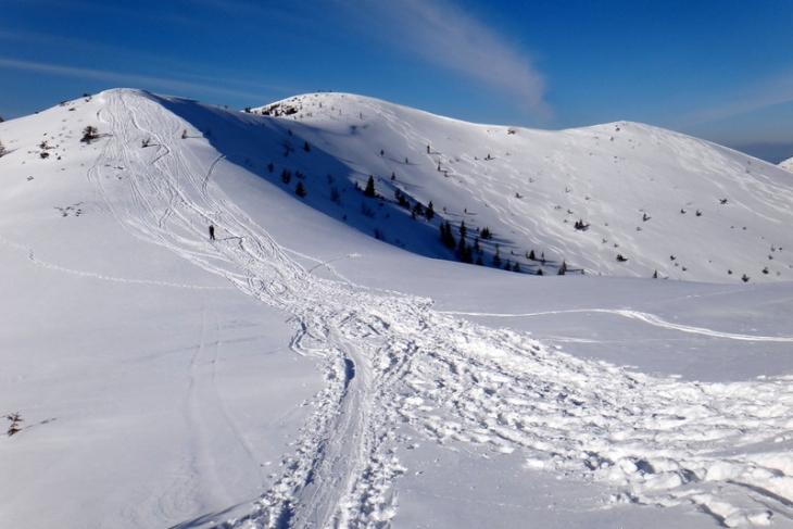 Rakoń zimą-5