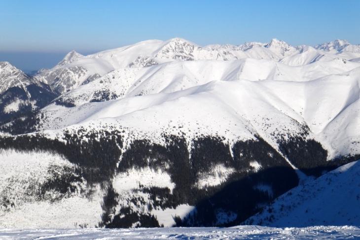 Rakoń zimą-9